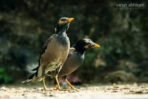 Birds of a Feather by varunabhiram