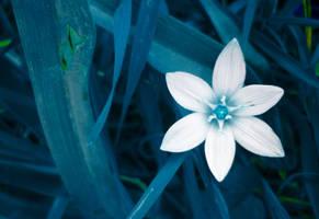 BLUE FLOWER by swealex