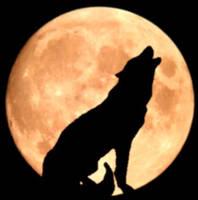 wolf by LordMezzanotte