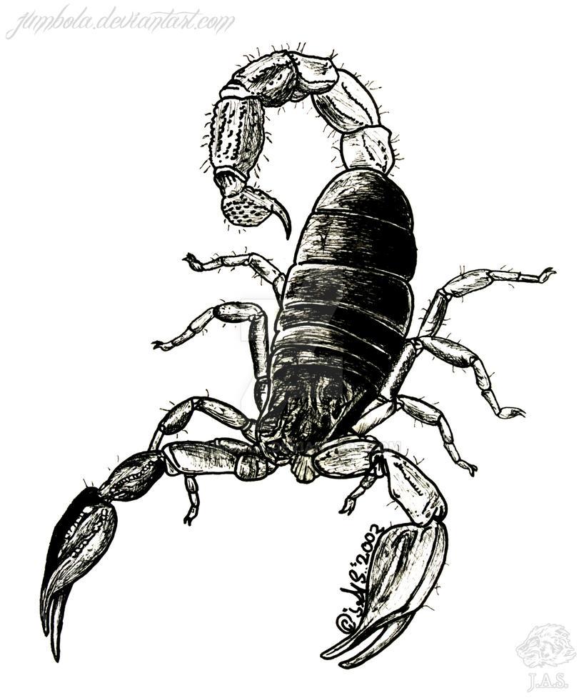 Scorpion by JUMBOLA