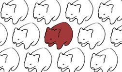 Wombats a plenty by Stepherz-Firefox