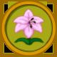 Pink Lily Circular Icon