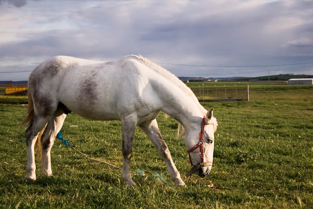 Caballo Blanco by SuperStar-Stock