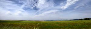 Campo de Trigo Panoramica