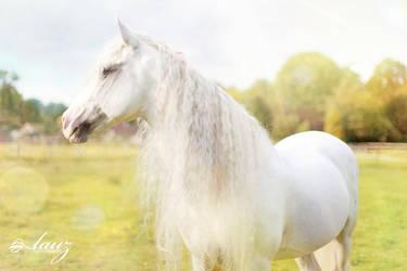 Must be a Unicorn by lauzphotography