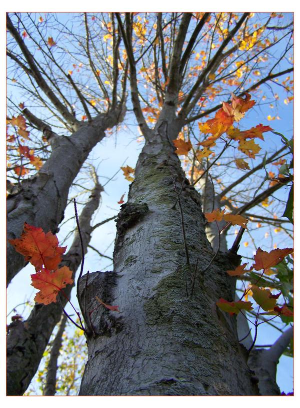 An Autumn Chorus. by midnitestarz18
