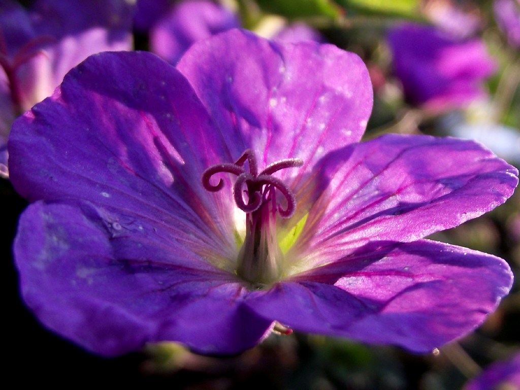 Curly stamen purple flower by knightstrobe on deviantart curly stamen purple flower by knightstrobe mightylinksfo