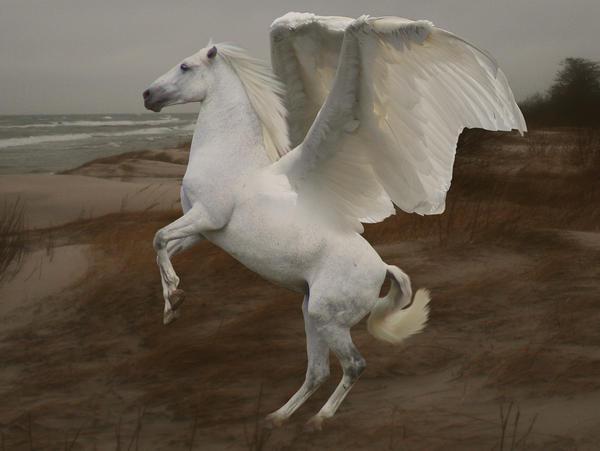 Epona Pegasus_by_Achatina
