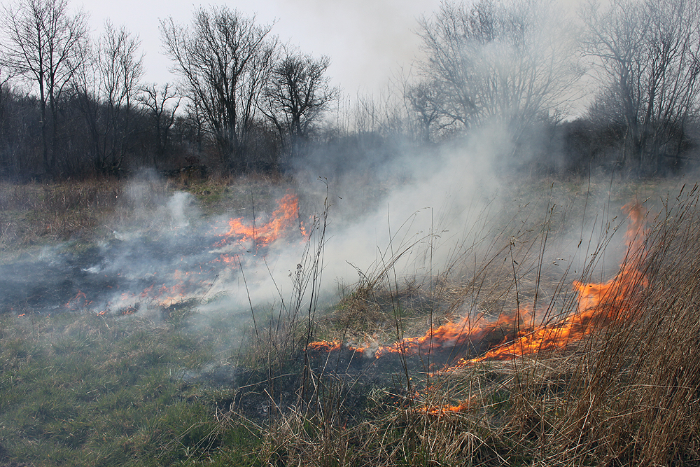 Grassfire by Achatina