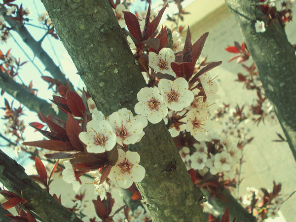 indie style flower by aznbabii0712