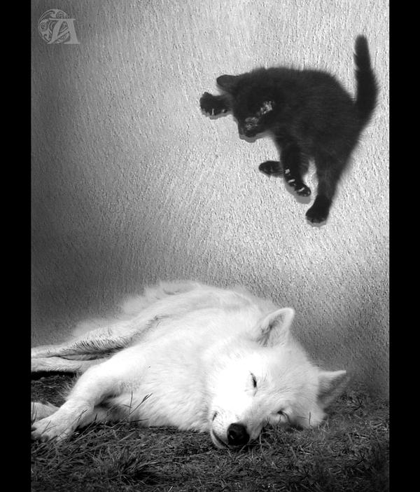 Cat Attack by Azenor