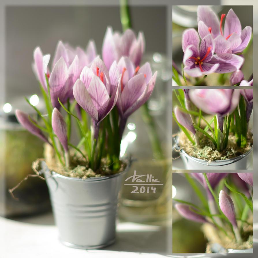 Clay saffron by dallia-art