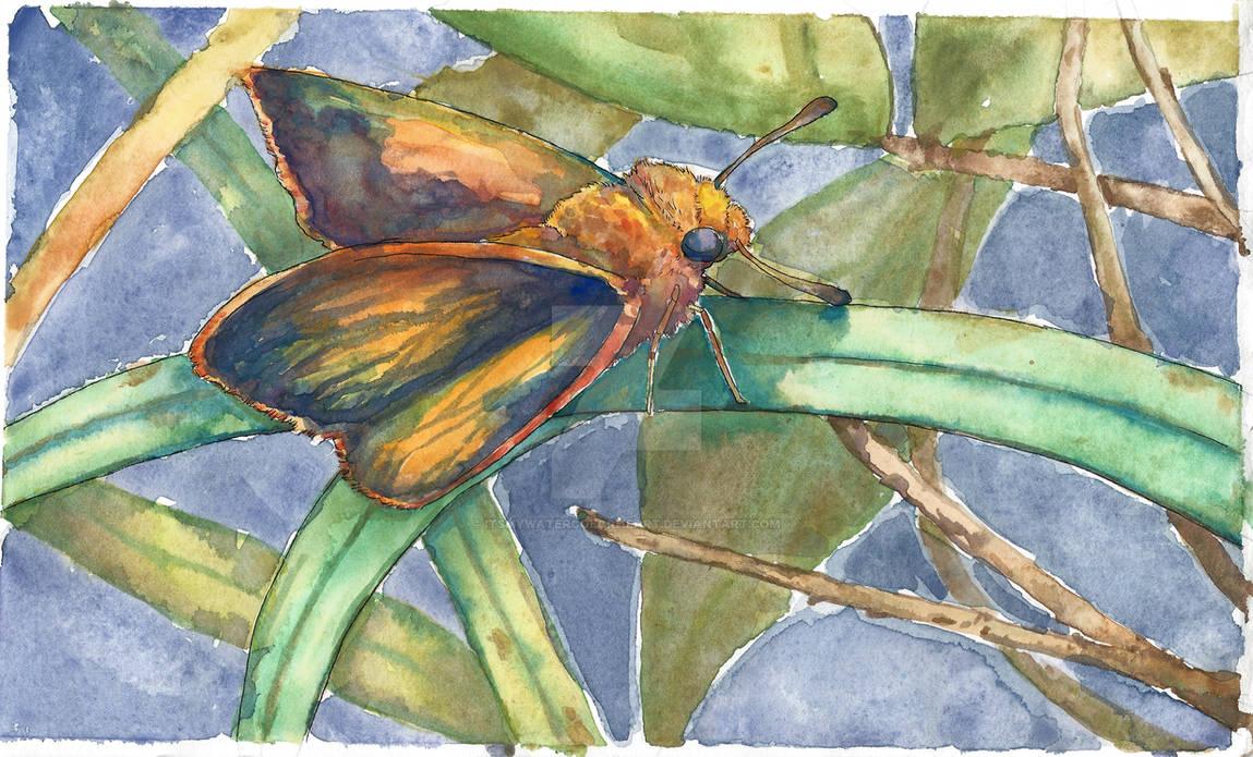 Skipper Butterfly watercolor by itsmywatercolorheart
