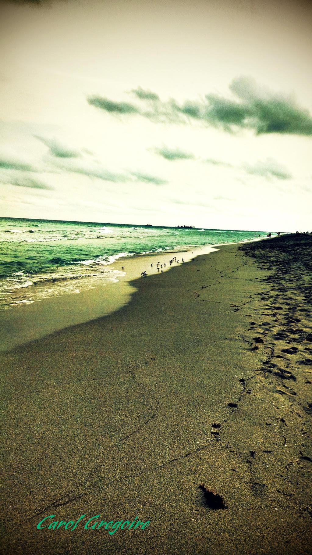 Sandpiper Walk by carolgregoire