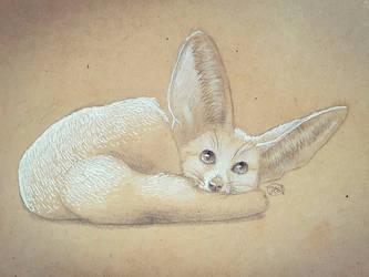 Fennec cutie ^^ by Aid-the-dragon