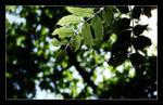 Leaf It