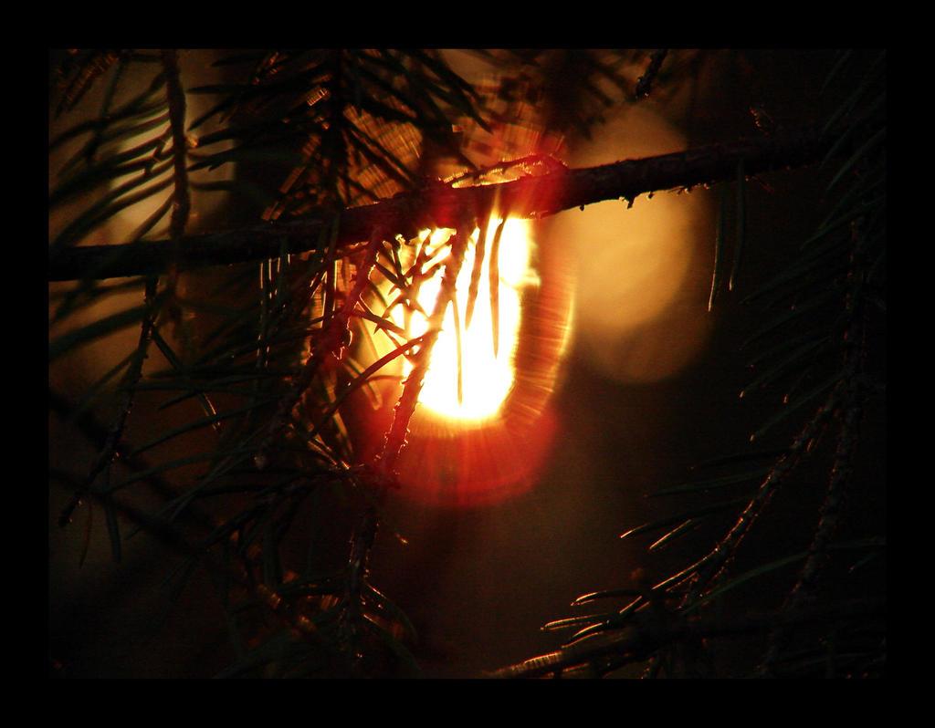 Harbinger of Light