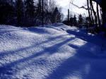 Snowy Day I: Fence