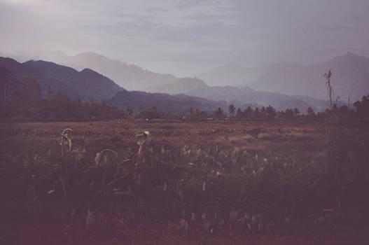 Bukit