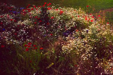 Garden, Mine by Alteru