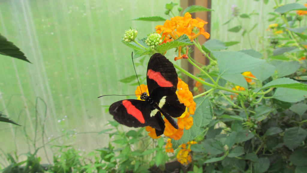Butterfly 02 by Gylfie599
