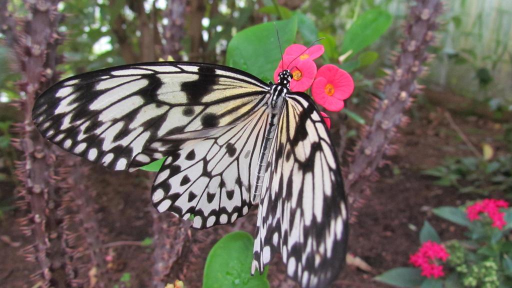 Butterfly 03 by Gylfie599