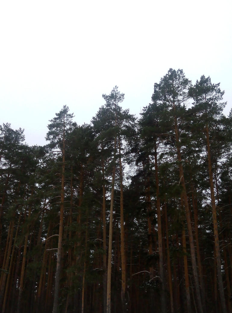 Great Russian forest by Fizpok