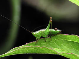 Sitting Grasshopper 160222 by StockProject1