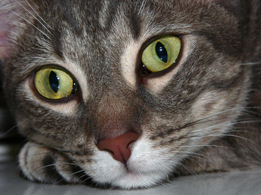 Cat Eyes 934678 by StockProject1
