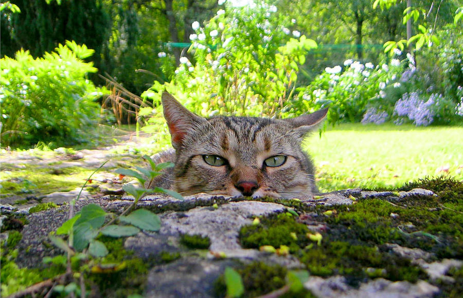 Watching Cat 1480416