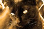 Black Cat 2341173