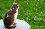 Thoughtful Cat 3140746
