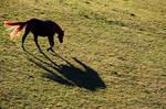 Galloping Horse 10354588