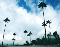 Island Trees 5527725 by StockProject1