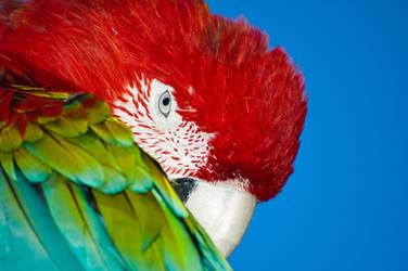 Bashful Bird 16865910 by StockProject1
