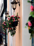 Wall Flowers 15698710