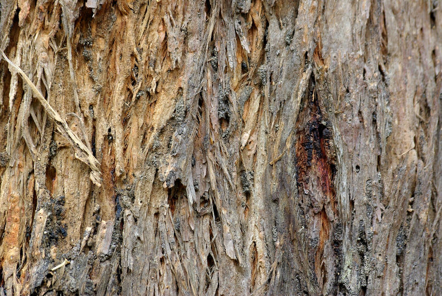 Old Bark 4753118 by StockProject1