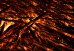 Blazing Fire 12036947