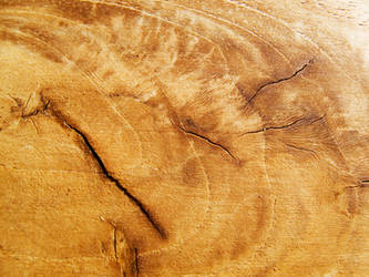 Cracked Wood 25392937 by StockProject1