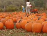 Pumpkin Patch 4670096