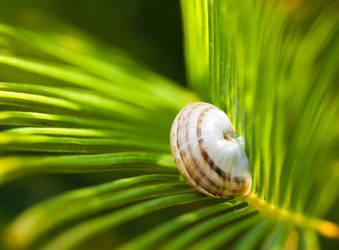 Tiny Snail 17050125 by StockProject1