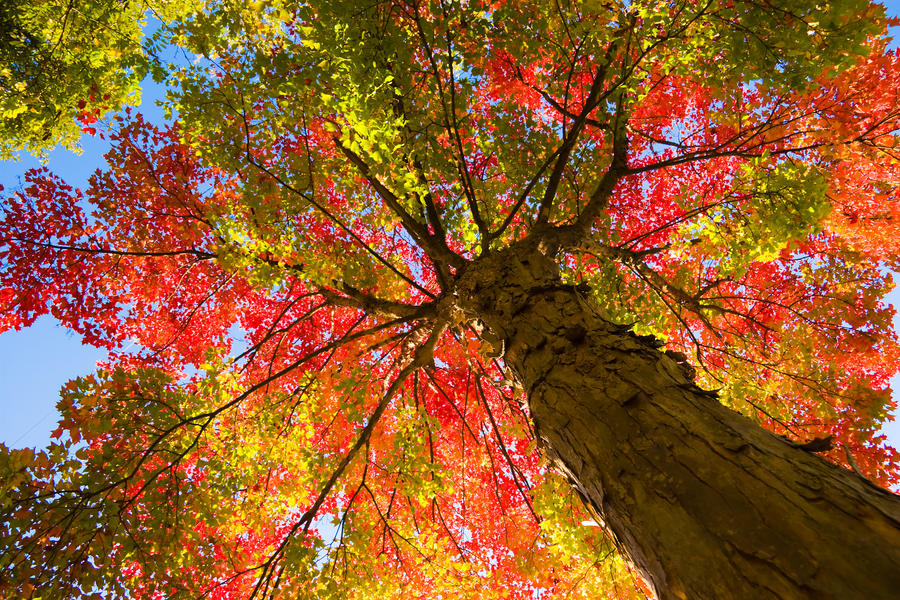 Image result for autumn tree