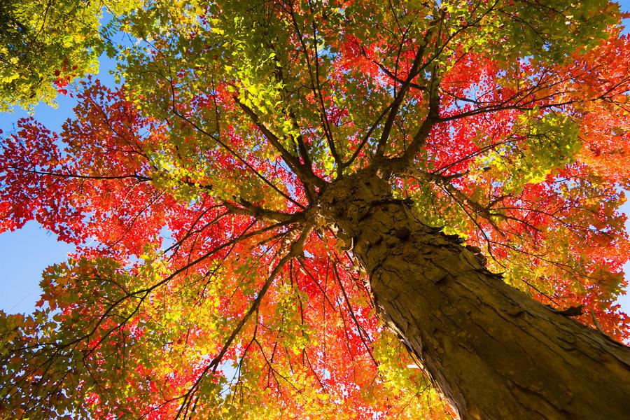 Afbeeldingsresultaat voor autumn tree