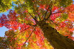 Autumn Tree 17068457