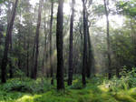 Sunny Forest 111435