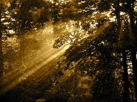Sun Rays 146272 by StockProject1