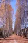 Tree Row 161087
