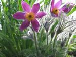 Purple Flowers 237324