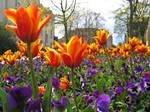 Bright Flowers 467749