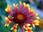 Colorful Petals 473843
